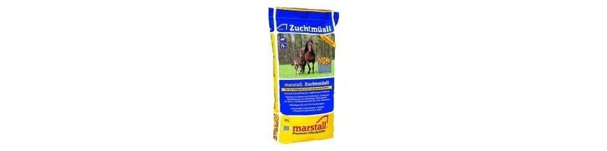 Marstall Zucht (élevage)